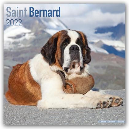 Saint Bernard - Bernhardiner 2022 - 16-Monatskalender