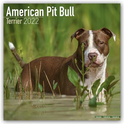 American Pit Bull Terrier 2022 - 16-Monatskalender