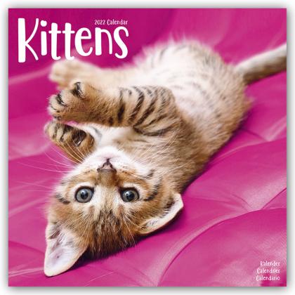 Kittens - Kätzchen 2022 - 16-Monatskalender