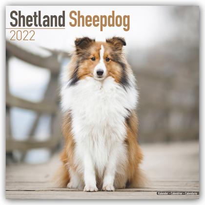 Shetland Sheepdog - Shelties 2022 - 16-Monatskalender