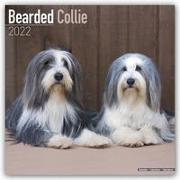 Bearded Collie 2022 - 16-Monatskalender