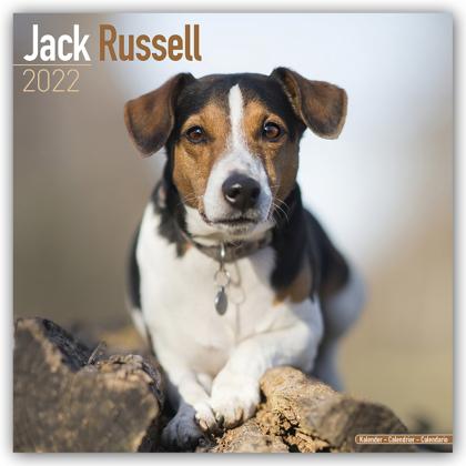 Jack Russell Terrier 2022 - 16-Monatskalender
