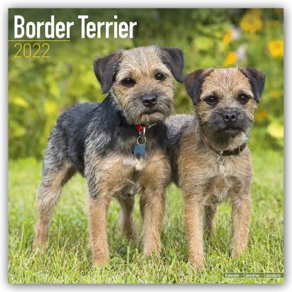 Border Terrier 2022 - 16-Monatskalender