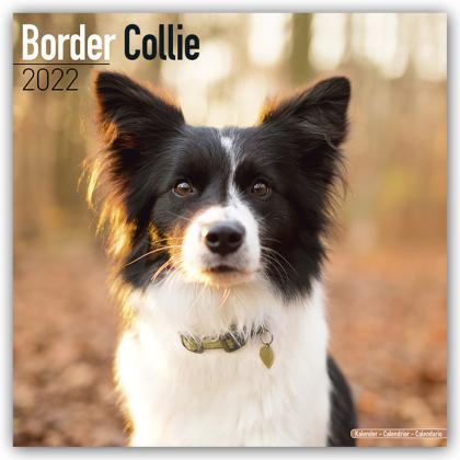 Border Collie 2022 - 16-Monatskalender