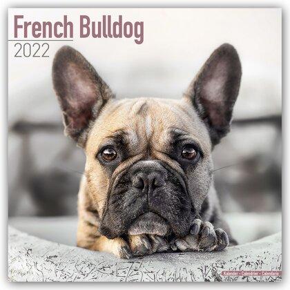 French Bulldog - Französische Bulldoggen 2022 - 16-Monatskalender