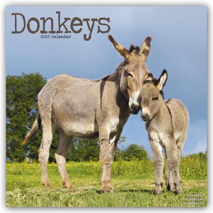 Donkeys - Esel 2022 - 16-Monatskalender