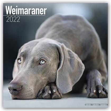 Weimaraner - Weimaraner 2022 - 16-Monatskalender