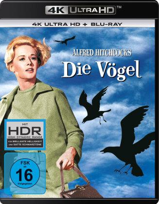 Die Vögel (1963) (4K Ultra HD + Blu-ray)
